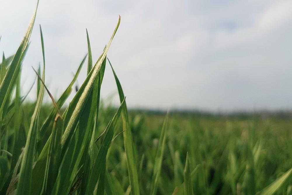 Eiwit uit gras en groen blad als circulaire grondstof voor varkens en pluimvee