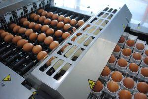 Prijs van eieren af boerderij blijft dalen