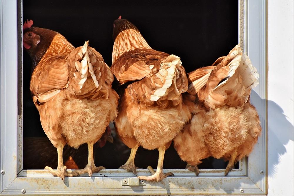 Vogelmijt bestrijden met nieuw stappenplan
