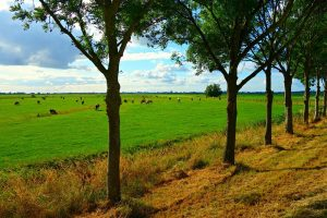 wijziging Regeling geurhinder en veehouderij