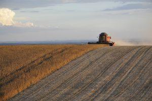 Nederlandse diervoedersector loopt voorop in gebruik duurzame soja