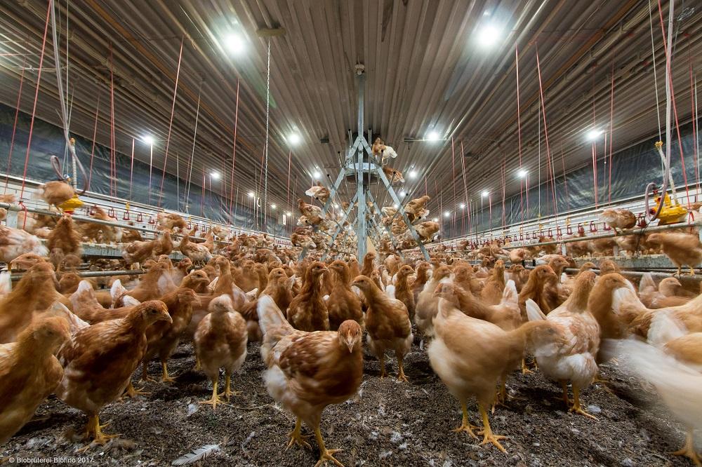LED Gen 3-verlichting: Perfecte combinatie van economie en dierenwelzijn