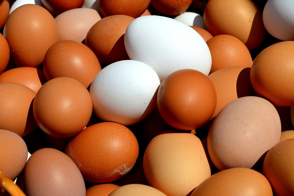 Eieren af boerderij laag geprijsd, eieren in supermarkt duur